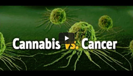 CBD vs Cancer